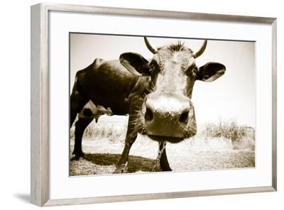 Funny Cow Stains-ongap-Framed Photographic Print