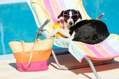 Funny Dog Sunbathing On Summer-Dirima-Photographic Print