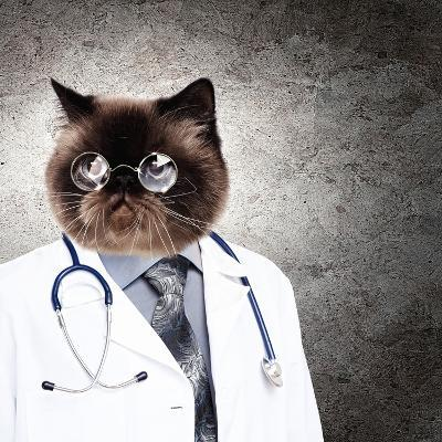 Funny Fluffy Cat Doctor In A Robe And Glasses. Collage-Sergey Nivens-Photographic Print