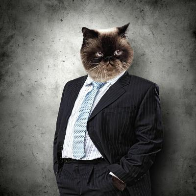 Funny Fluffy Cat In A Business Suit Businessman. Collage-Sergey Nivens-Photographic Print