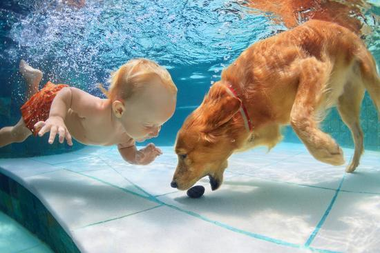 Funny Little Child Play with Fun and Train Golden Labrador Retriever Puppy in Swimming Pool, Jump A-Tropical studio-Photographic Print