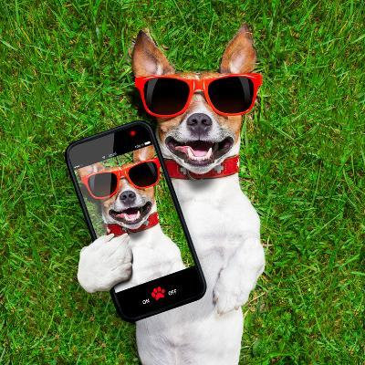 Funny Selfie Dog-Javier Brosch-Photographic Print