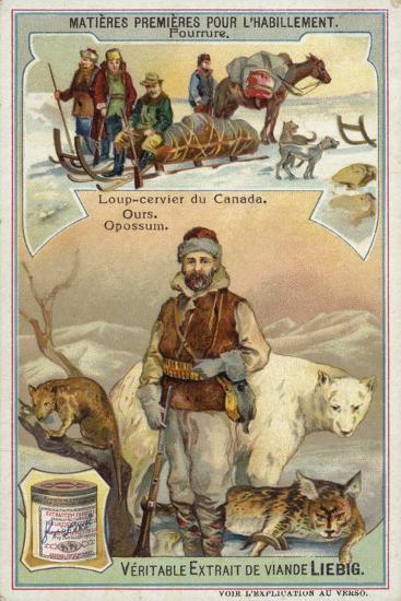 Fur: Canadian Lynx; Bear and Opossum--Giclee Print