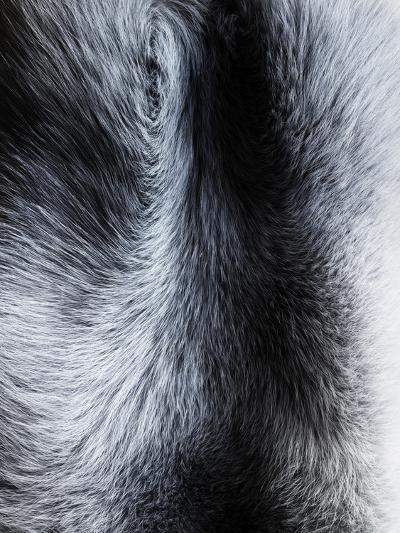 Fur Close-up II-Graeme Montgomery-Photographic Print
