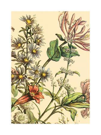 https://imgc.artprintimages.com/img/print/furber-flowers-iv-detail_u-l-f5w5v20.jpg?p=0