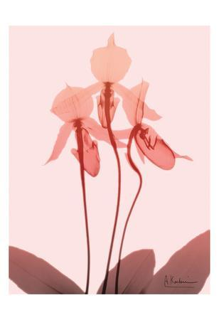 https://imgc.artprintimages.com/img/print/furiosa-orchid_u-l-f8vya20.jpg?p=0