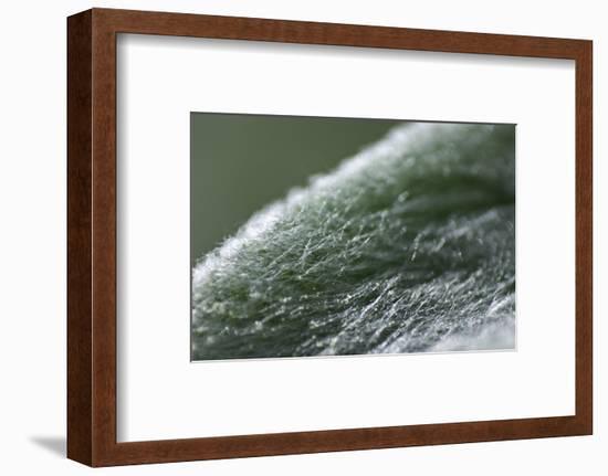 Furry-K.B. White-Framed Photographic Print