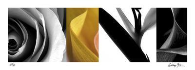 https://imgc.artprintimages.com/img/print/fusion-iv_u-l-f3krkm0.jpg?p=0