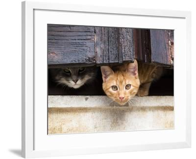 Fwo Cars Hiding behind the Window-nevenm-Framed Photographic Print