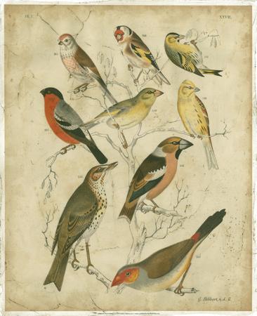Avian Gathering II