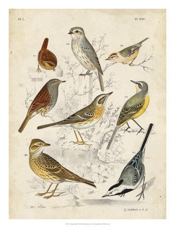 Gathering of Birds I