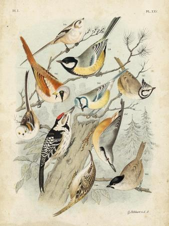 Gathering of Birds II