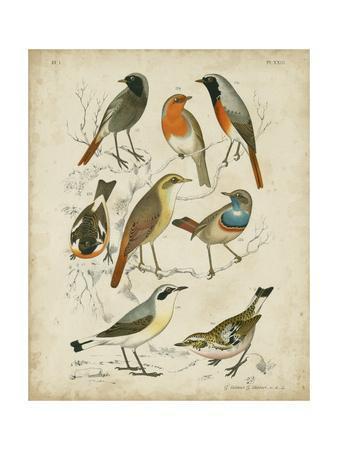 Non-Embellished Avian Gathering I