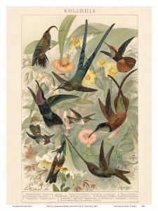 Exotic Humming Birds (Kolibris) - Bookplate from Brockhaus' Konversations-Lexikon Vol. 2 by G^ Muetrel