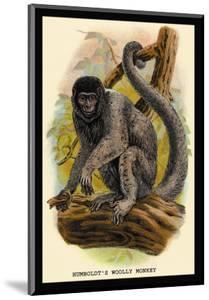 Humboldt's Woolly Monkey by G.r. Waterhouse
