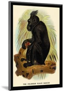 The Celebean Black Baboon by G.r. Waterhouse