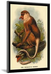 The Proboscis Monkey by G.r. Waterhouse