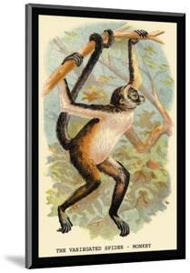 The Variegated Spider-Monkey by G.r. Waterhouse