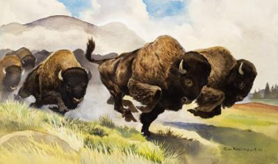 These Buffalo are Bison, 1962 by G. W Backhouse