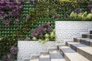 A Living Wall Along a Stairway in an Urban Setting by Gabby Salazar