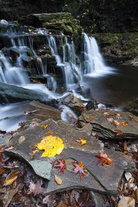 A Waterfall in Ricketts Glenn State Park by Gabby Salazar