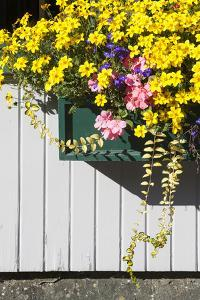 A Window Box Filled with Cascades of Flowers by Gabby Salazar