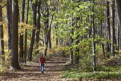 A Woman Walks on a Forest Trail in the Delaware Water Gap National Recreation Area