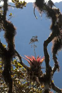 Bromeliads Grow in Cloud Forest Trees by Gabby Salazar