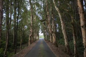 Tree-Lined Road to Alexandria Falls Lookout by Gabby Salazar
