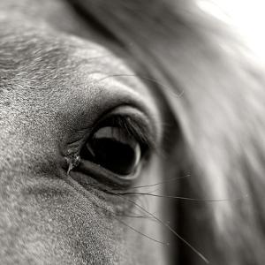 Eye of Horse by Gabriella Nonino