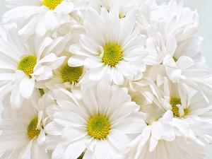 Bunch of White Daisies by Gail Peck