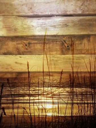 By The Grass Sunset Wood by Gail Peck