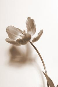 Delicate Floral I by Gail Peck