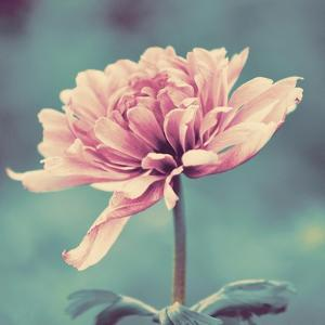 Gorgeous Pink by Gail Peck