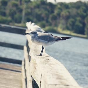 Look Out Dock I by Gail Peck