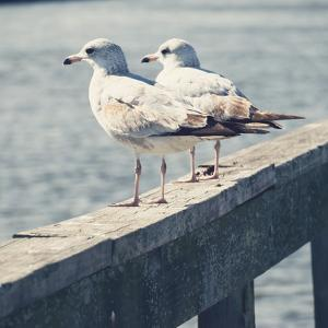 Look Out Dock II by Gail Peck
