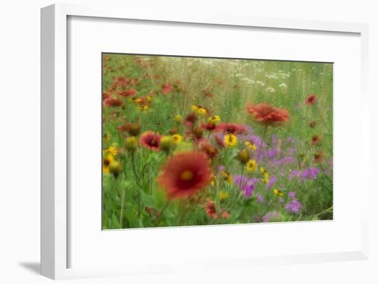 Gaillardia, coreopsis and pointed phlox, blowing in the wind, Texas-Tim Fitzharris-Framed Art Print