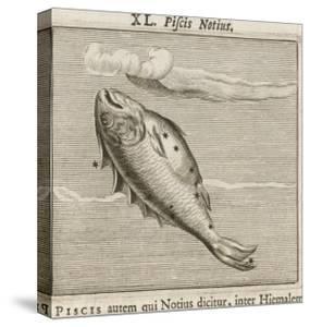 Piscis Notius by Gaius Julius Hyginus