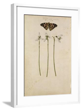 Galanthus Nivalis and Painted Lady Butterfly, C.1568--Framed Giclee Print