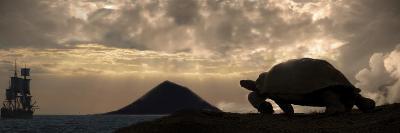 Galapagos Giant Tortoise And Sail Ship-Paul Stewart-Photographic Print