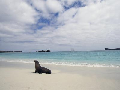 Galapagos Sea Lion on Beach-Steve Winter-Photographic Print