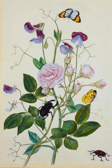 Galica Rose and Perennial Sweet Pea, Weevil, a Beetle and Butterflies-Thomas Waterman Wood-Giclee Print