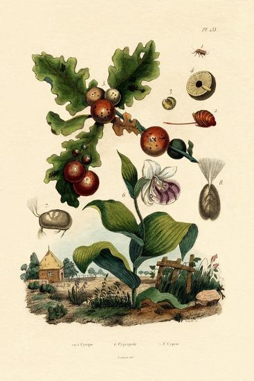 Gall Wasp, 1833-39--Giclee Print
