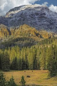 Bison Grazing In The Yellowstone Grand Landscape by Galloimages Online