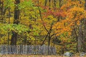 Fall Fence Scene by Galloimages Online