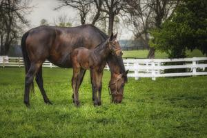 Mare and Foal Together by Galloimages Online