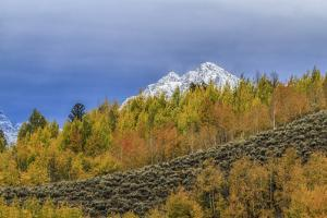 Mountain Fall Color by Galloimages Online