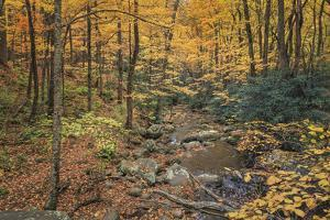 Roaring Fork Stream by Galloimages Online