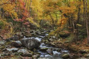 Tremont Stream Watercolor by Galloimages Online