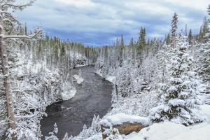Yellowstone Winter In Fall by Galloimages Online